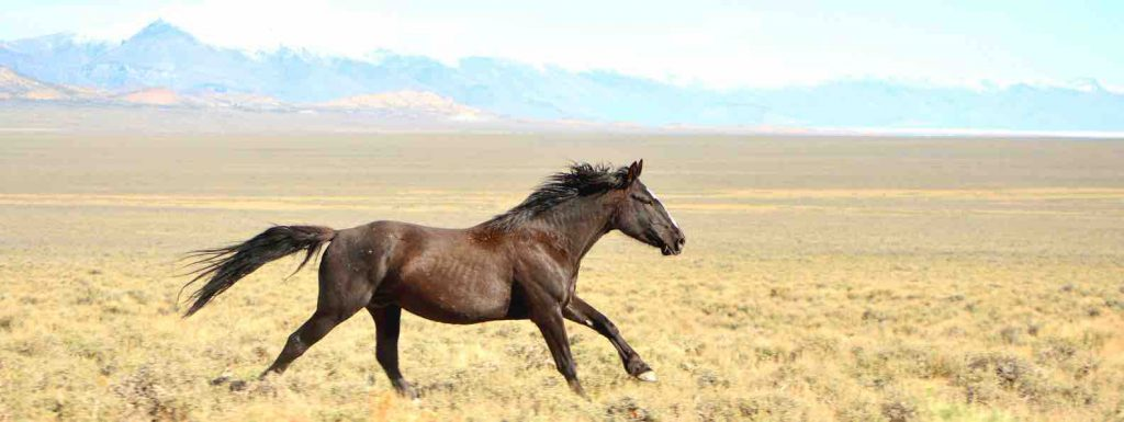 Wild horse running in the country side with mountains in the background